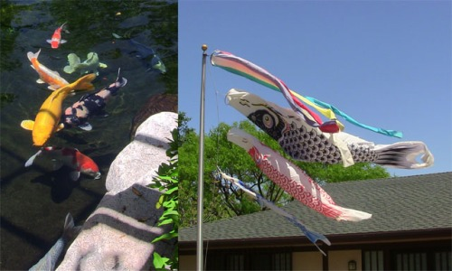 (L to R) Koi in the pond at the Japanese Friendship Garden; Koi kites on the pole.